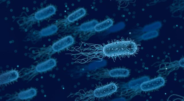 Artificial Intelligence on its way to help to predict drug resistant bacteria