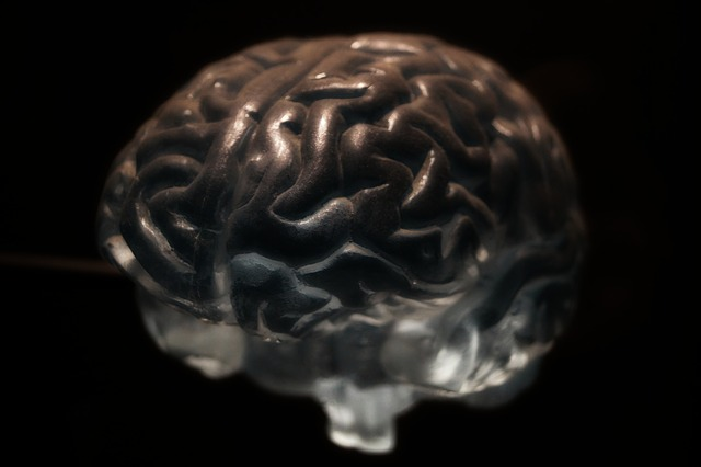 Mutation linked to Alzheimer's may cause neuron blockages